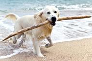 Sylt Hund